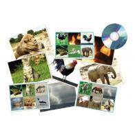 Środowisko naturalne i zwierzęta
