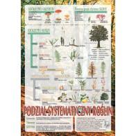 Plansza botanika - Systematyka roślin